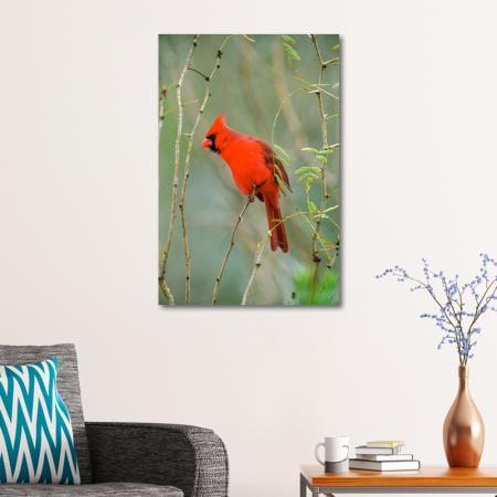 Kırmızı Kuş resim2