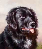 Köpek Portresi - HT-C-064