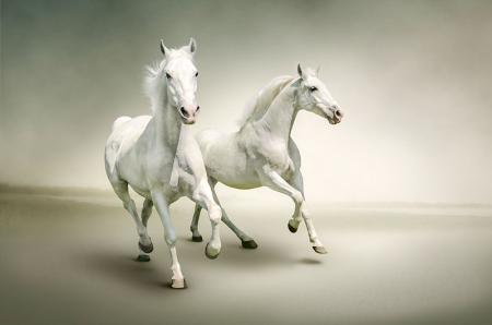 Koşan Beyaz Atlar 0