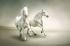 Koşan Beyaz Atlar k0