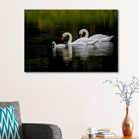 Kuğu Ailesi resim2