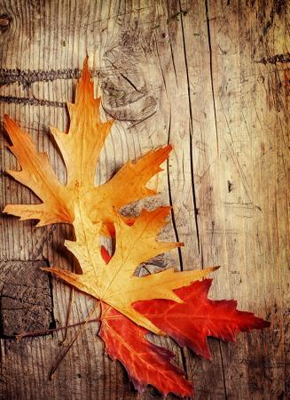 Kurumuş Çınar Yaprakları resim