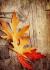 Kurumuş Çınar Yaprakları k0