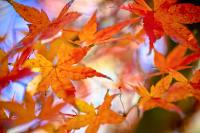 Kurumuş Yapraklar - CT-C-211