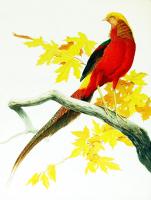Kuş - HT-C-075
