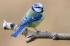 Kuş k0
