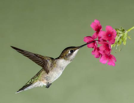 Kuş resim