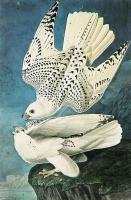Kuşlar - HT-C-077