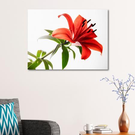 Lilyum Yaprağı resim2