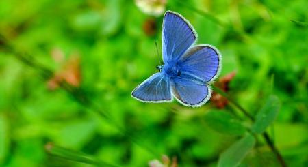 Mavi Kelebek Yeşil Yapraklar resim