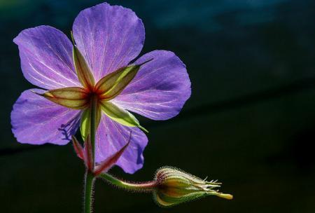 Mor Çiçek resim
