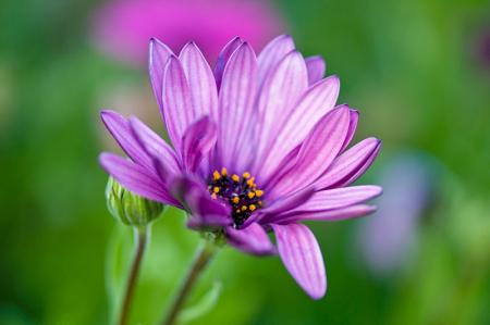 Mor Çiçek 0