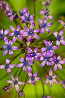 Mor Çiçekler - CT-C-162