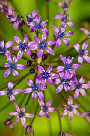 Mor Çiçekler resim