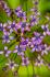 Mor Çiçekler k0