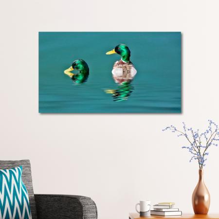 Ördekler resim2