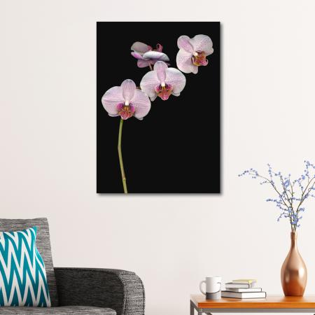 Orkide resim2
