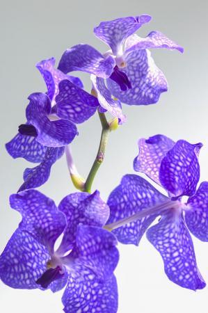 Orkide Yaprakları resim