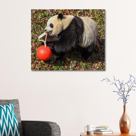 Panda resim2