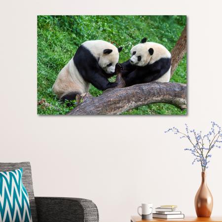 Pandalar resim2