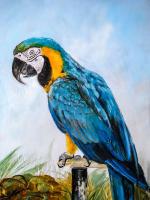 Papağan - HT-C-079