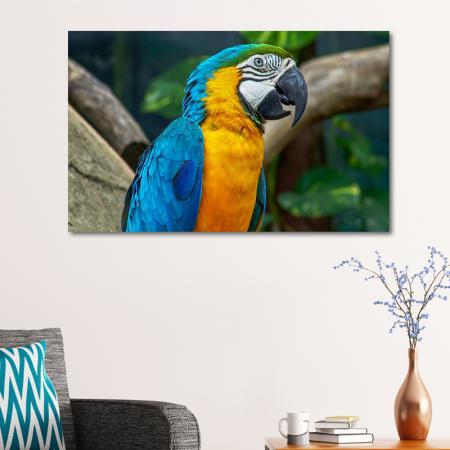 Papağan resim2