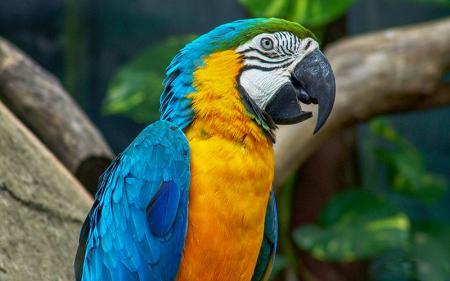 Papağan resim
