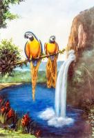 Papağanlar - HT-C-080