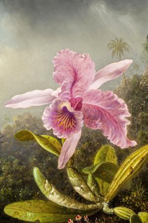 Pembe Çiçek resim
