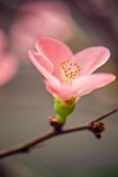 Pembe Çiçek - CT-C-212