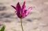 Pembe Çiçek k0