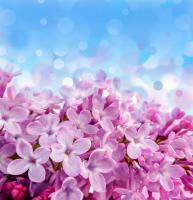 Pembe Çiçekler - CT-C-188
