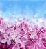 Pembe Çiçekler k0