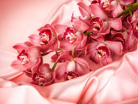 Pembe Orkide 0