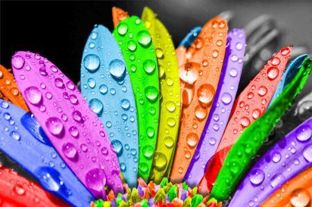Renkli Çiçek resim