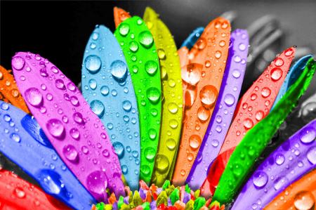 Renkli Çiçek 0