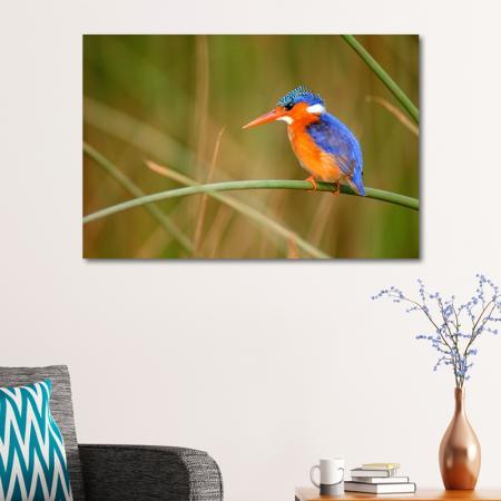 Renkli Kuş resim2
