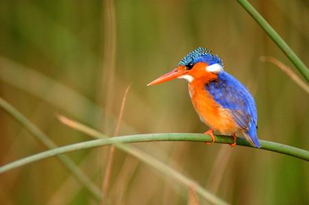 Renkli Kuş 0