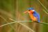 Renkli Kuş k0