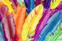 Renkli Kuş Tüyü - CT-C-186