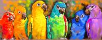 Renkli Papağanlar - HT-C-069