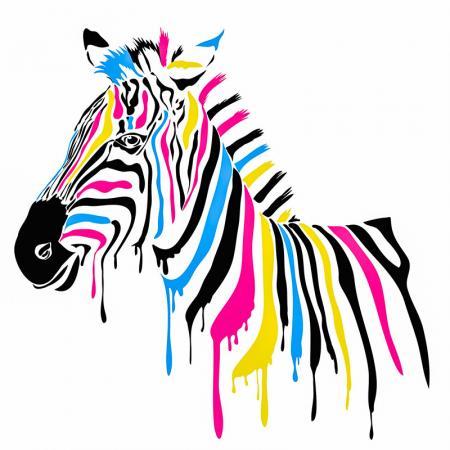 Renkli Zebra resim