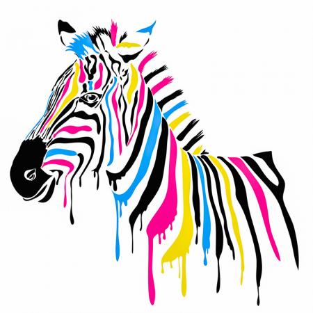 Renkli Zebra 0
