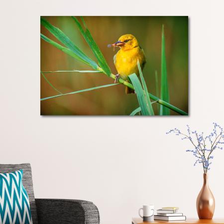 Sarı Kuş resim2