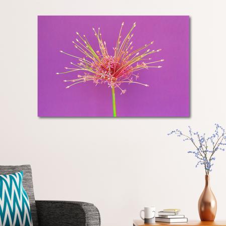 Şeftali Çiçegi resim2