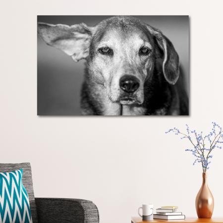 Siyah Beyaz Köpek Portresi resim2