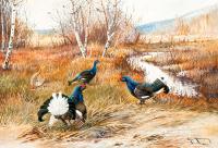 Tavus Kuşları - HT-C-088