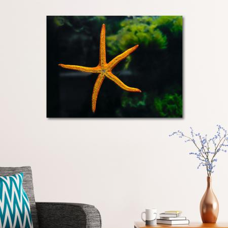 Turuncu Deniz Yıldızı resim2
