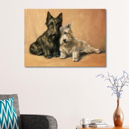 Tüylü Köpekler resim2