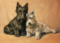 Tüylü Köpekler - HT-C-063